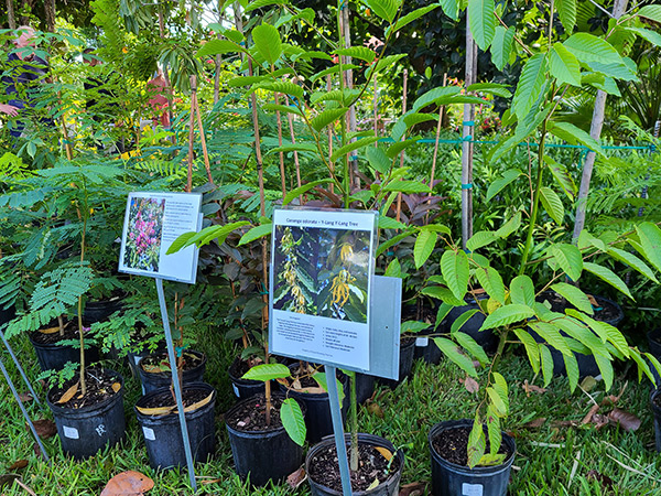 Cooperative Extension Offers Certificate in Native Plants
