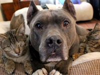 PBC Animal Care and Control Urges the Community to Foster or Adopt a Pet Online