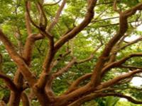 Native Canopy Education Program