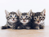 Tri-County Shelters Advise South Floridians – Don't Kit-Nap Kittens