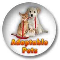 AC&C Waiving Adoption Fees