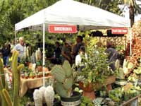 Plant-a-Palooza Annual Plant Sale November 7-8 at Mounts