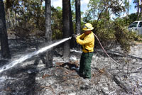 Prescribed Burns Planned for Okeeheelee Park Natural Areas