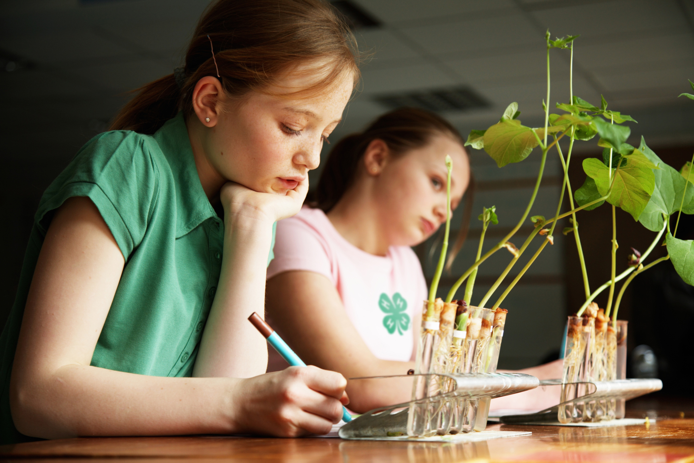 Girls working on science at school