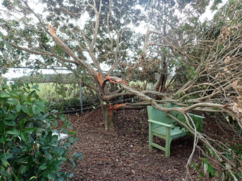 http://pbcspauthor/coextension/SiteImages/News/Hurricane damaged tree.jpg