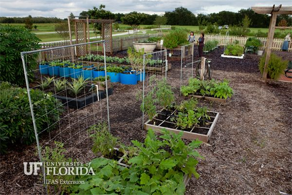 /coextension/SiteImages/News/IFAS Garden.jpg