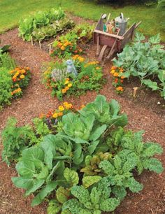 Free Lecture - Prepping for a Fall Garden