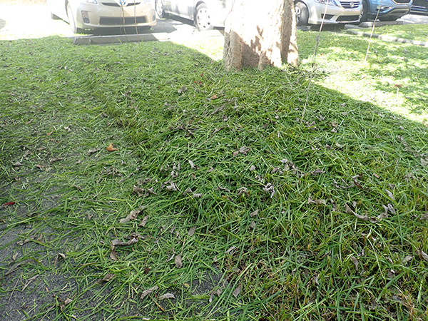 http://pbcspauthor/coextension/SiteImages/News/grass.clippings.excessive.JPG