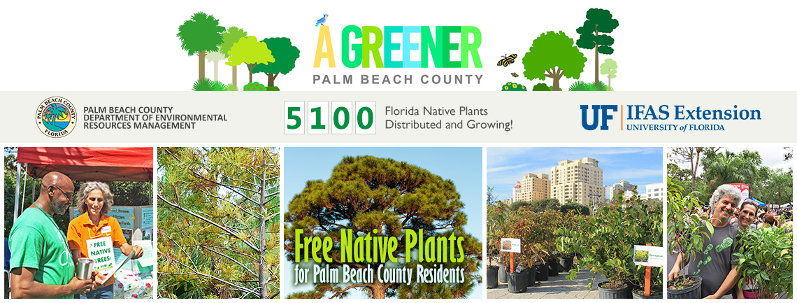 "Banner showing ""A Greener Palm Beach County"" partnership begtween Palm Beach County ERM and University of Florida IFAS Extension"
