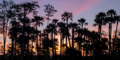 Picture of a Sunset behind palm trees at a Palm Beach County Natural Area