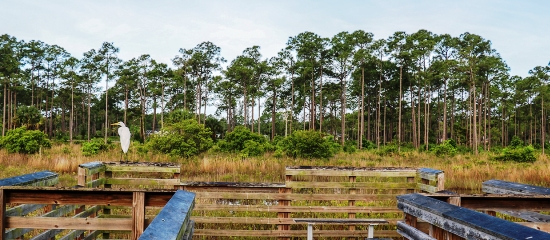 Picture of an observation platform overlooing wetland at Acreage Pines Natural Area
