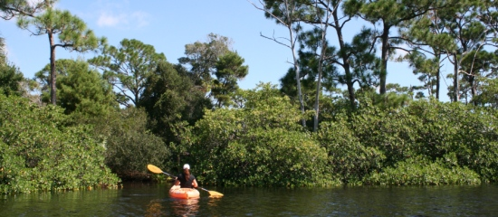 Picture of a kayaker paddling along the edge of Jackson Riverfront Pines Natural Area