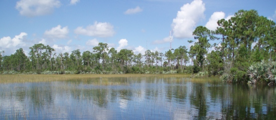 Picture of open water wetland at Pond Cypress Natural Area