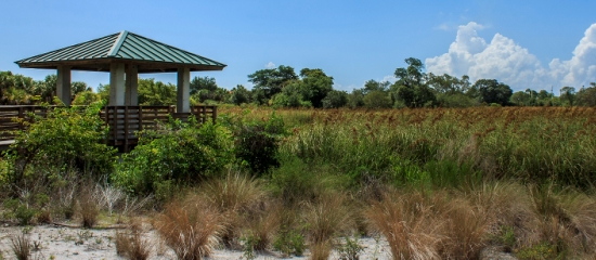 Picture of accessible covered obsrevation platform overlooking a restored wetland at Pondhawk Natural Area