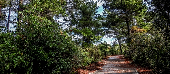 Picture of a paved accessible trail through the woods at Rosemary Scrub Natural Area