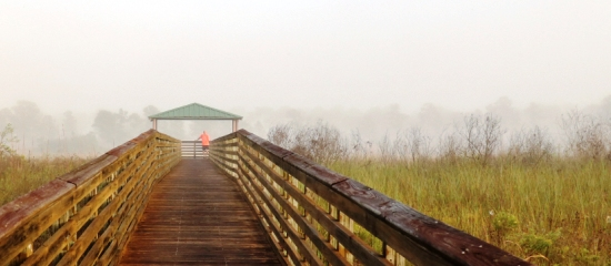 Picture of person at shaded observation platform enjoying the wetland view at Royal Palm Beach Pines Natural Area