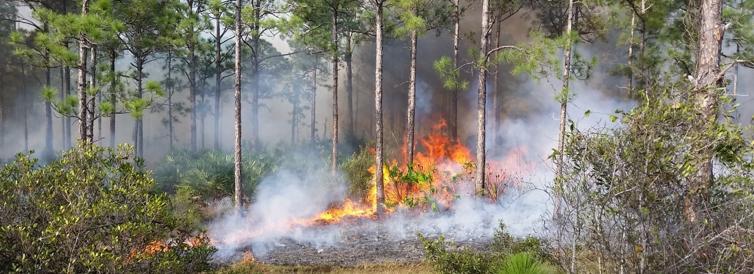Picture of a controlled fire in a Palm Beach County Natural Area