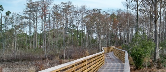 Picture of accessible boardwalk through the cypress swamp at Delaware Scrub Natural Area
