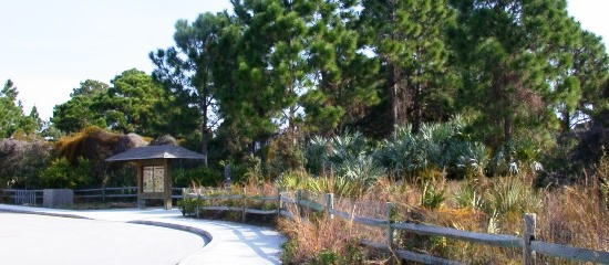 Picture of the entrance into Seacrest Scrub Natural Area