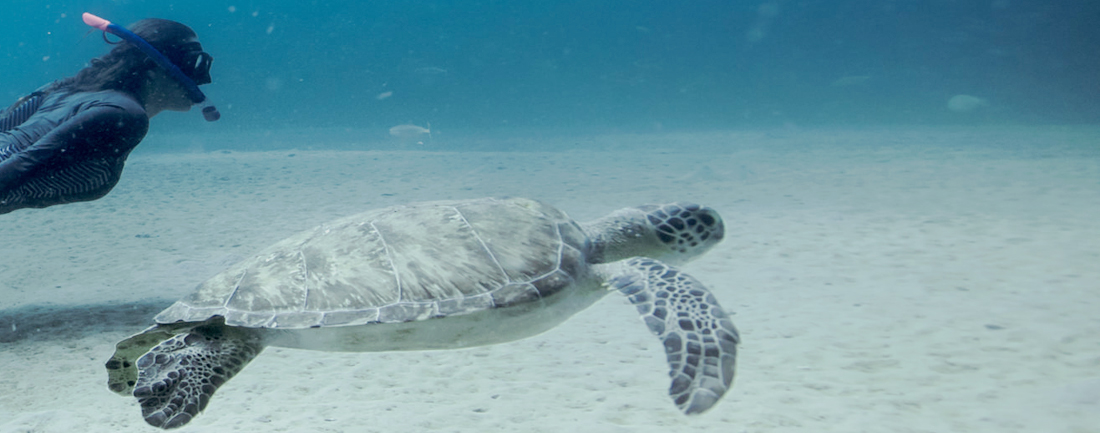 Sea turtle swimming off the coast of Palm Beach County