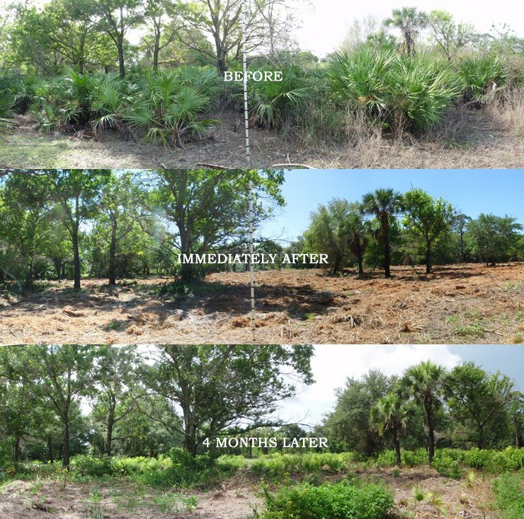 Before and After Images of Wildfire Mitigation Mechanical Vegetation Removal