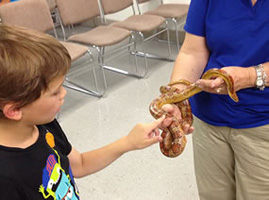 child touching snake