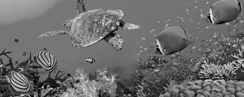 Turtle and fish swimming
