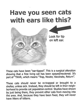 have you seen cats with ears like this image