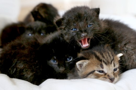 litter of kittens